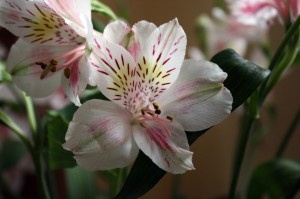 450D flower